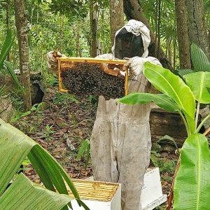 Beekeeper in rural Haiti